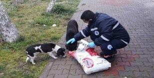 Biga Belediyesi sokak hayvanlarını unutmuyor