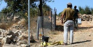 Yahudi yerleşimciler Batı Şeria'da Filistinli çiftçilere saldırdı