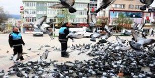 Kestel'de sokak hayvanları yalnız değil