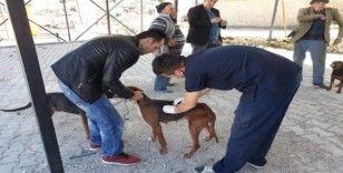 Çal'da bin 250 hayvana aşı yapıldı