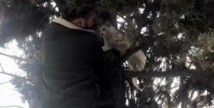 Ağaçta mahsur kalan hamile kedinin yardımına esnaf yetişti