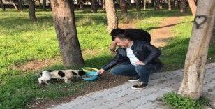 Sokak hayvanları için mama bıraktılar