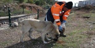 Gölbaşı Belediyesi sokak hayvanlarını yalnız bırakmadı