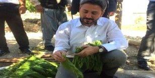 Milletvekili Aydın'dan tütün üreticilerine büyük müjde