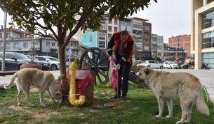 Akhisar'da sokak hayvanları unutulmadı