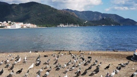 Sahiller güvercin ve martılara kaldı