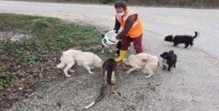 Düzce Belediyesi sokak hayvanlarını unutmadı