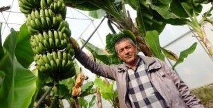 Korona'ya inat Türk çiftçisi üretiyor