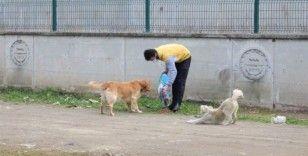 Başiskele'de sokak hayvanlarına mama desteği veriliyor