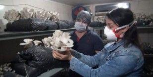 Tarsus'ta kursiyerlerin ürettiği istiridye mantarı hasat edildi