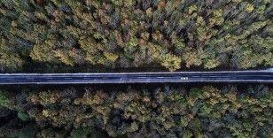 Ormanların gençleştirilmesine yaklaşık 300 milyon lira harcandı