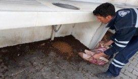 Biga'da sokak hayvanlarına yardım
