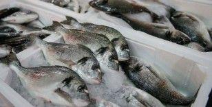 Balık tüketim kampanyasıyla zincir marketlerde çipura ve levrek maliyetine satılacak