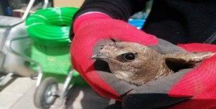 Yaralı ebabil kuşuna esnaf sahip çıktı
