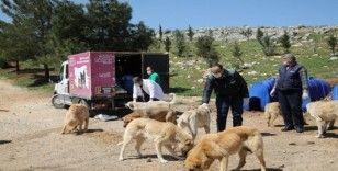 Büyükşehir 4 Nisan Sokak Hayvanları Koruma Günü'nü unutmadı