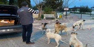 Samsat Belediyesi aç kalan hayvanları unutmadı