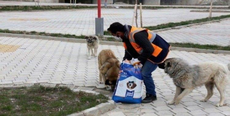 Gürpınar Belediyesi sokak hayvanlarını yalnız bırakmadı