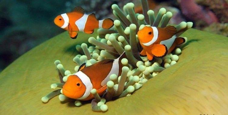 Salgının etkileri denizlere yarıyor