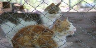 Diyarbakır Büyükşehir Belediyesi Hayvan Bakım Evi ve Rehabilitasyon Merkezinde denetim