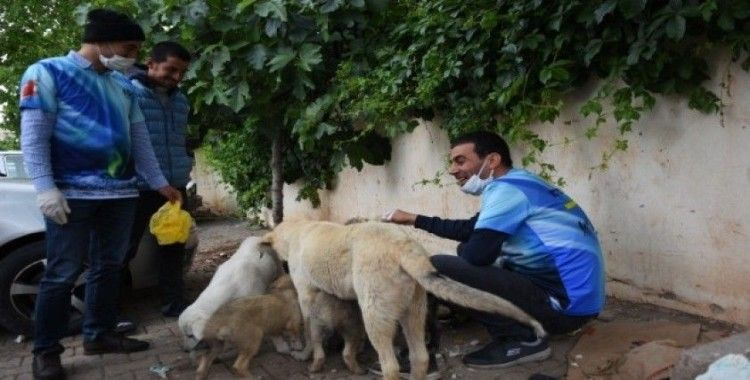 Özel izinle sokak hayvanlarını besliyorlar