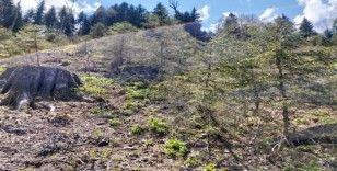 """Giresun Valiliği: """"Kümbet Yaylasında orman katliamı söz konusu değil"""""""