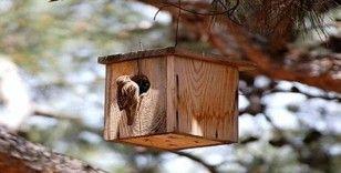 'Hayat yuvaya sığar' diye 3 bin kuş yuvası asıldı