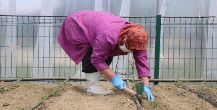 Bolu'da, eğitime verilen arada öğrenciler için yapılan seralarda öğretmenler ekim yapıyor