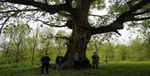 Yanan asırlık ağaç için belediye harekete geçti