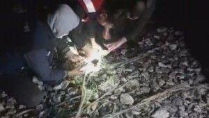 Van'da kaçak avcılıkta ele geçirilen canlı balıklar suya bırakıldı