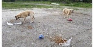 Sokak hayvanlarına din görevlileri sahip çıkıyor