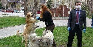 Ardahan'da sokak hayvanları unutulmadı