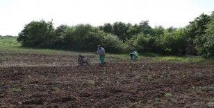 İzmit Belediyesi kompost gübre üretimine başladı