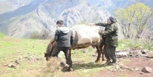 Pancar toplamak için dağı tırmanıp kilometrelerce yürüyorlar