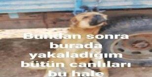 Erzincan'da köpeği römorka asan şüpheli şahıs gözaltına alındı