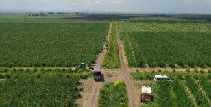 Prof. Dr. Davut Karayel: Türkiye tarımsal üretim gücünü salgında da gösterdi
