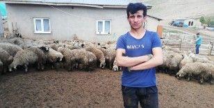 Erzincan'da 80'e yakın kuzu ahırdan çalındı