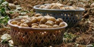 Kayseri'de hazine arazisine 4 ton patates tohumu ekildi