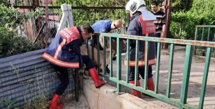 Köprü mazgalına sıkışan köpek yoğun uğraşlar sonucu çıkartıldı