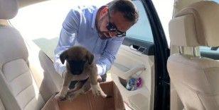 Yavru köpeğin tedavisi için makam aracı ile 250 km yol gitti