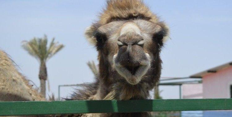 Irak'ın en büyük hayvanat bahçesi açıldı