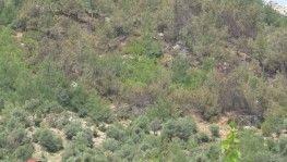 Kozan'da 1 hektar ormanlık alan yandı