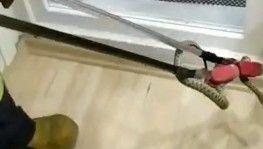 Eve giren yılan banyoda yakalandı