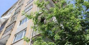 Arılar bina girişindeki ağaca yuva yaptı vatandaşlar paniğe kapıldı