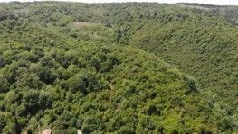 Bahçeköy'ün ormanları böyle görüntülendi