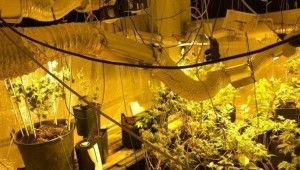 Sancaktepe'de evini uyuşturucu tarlasına çeviren zanlı suçüstü yakalandı