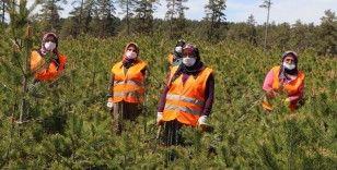 Ormancı kadınlar ev ekonomilerine katkı sağlıyor