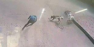 Köpekler bir anda saldırdı, genç ne yapacağını şaşırdı