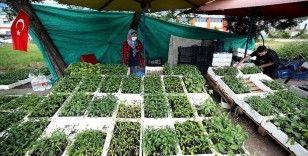 Kovid-19 Karadeniz Sahil Yolu'ndaki sebze ve meyve fidelerine ilgiyi artırdı