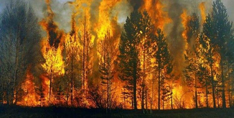 Ortaca'da orman yangını