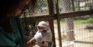 Antalya Hayvanat Bahçesi'nde 100'ün üzerinde doğum gerçekleşti